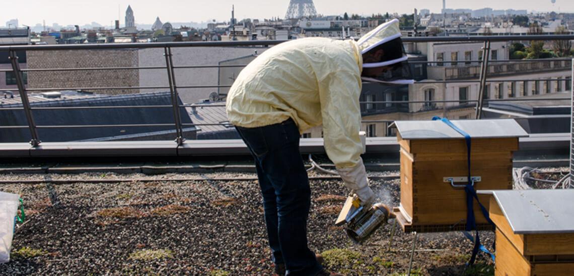 apiculture_01