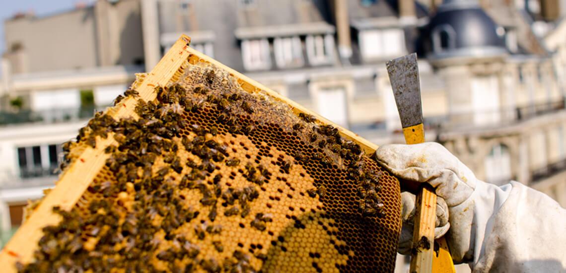 apiculture_lafarge