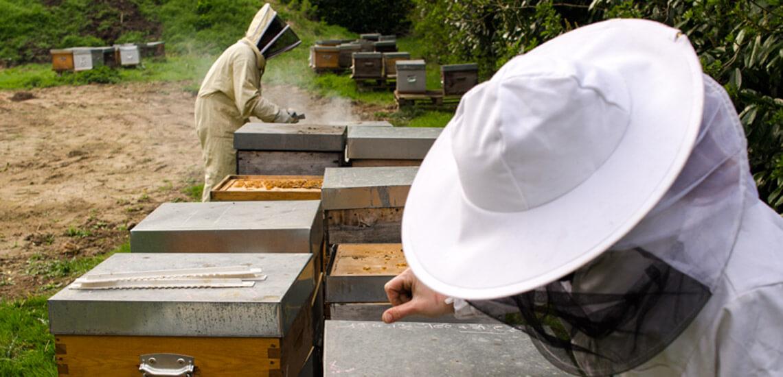 apiculture_mugo