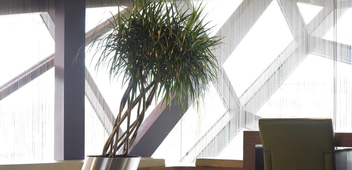 location_plantes_01