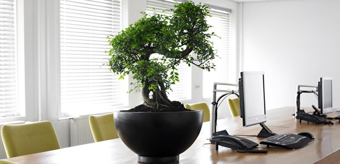 location_plantes_02
