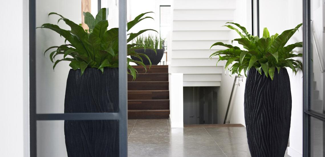 location_plantes_04